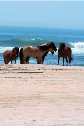 N. And Horses